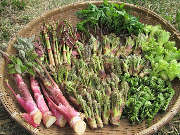 山菜の保存方法