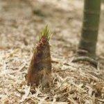筍の保存方法
