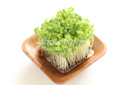 Sproutの保存方法