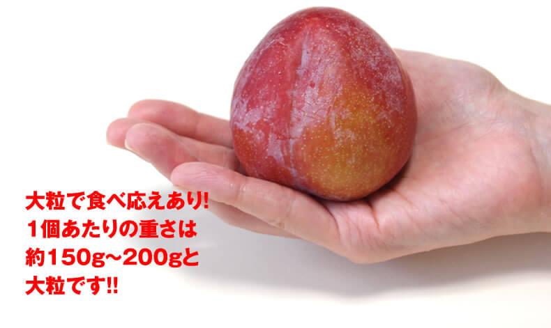 akihime-a4