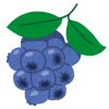 fruit_blueberry