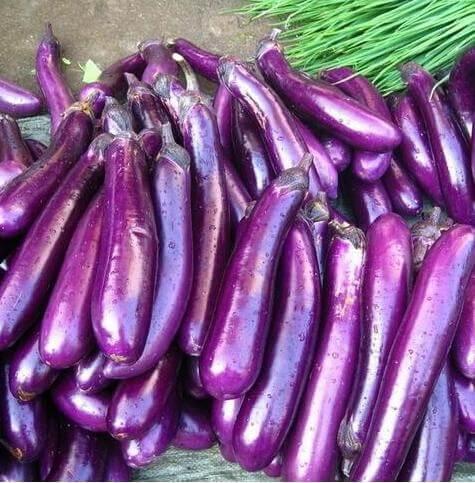 200ピース栄紫ナス紫ナス種子野菜の種ホームガーデン