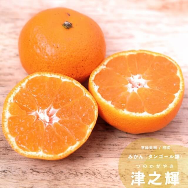 tsunokagayaki01