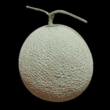 melon140824-360x360_png_pagespeed_ce_UnwFFGjtw-